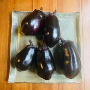 【みずみずしく美味しい!京山科なす(5個〜8個) 1kg  京野菜 】 1kg 野菜(茄子) 通販
