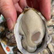 大入島オイスター 1.3キロ 25〜30個 魚介類(牡蠣) 通販