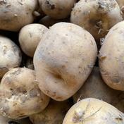 はなまる農園の「じゃがいも」 男爵約5kg 男爵いも約5kg 野菜(じゃがいも) 通販