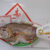 瀬戸内天然真鯛姿焼き400g1尾入 祝い飾り済(箱入り)・お祝いメッセージカード付 約40センチ400g1尾入 魚介類(その他魚介の加工品) 通販