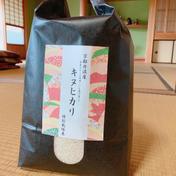 令和2年産京都丹波産キヌヒカリ 25kg 25kg 京都府 通販