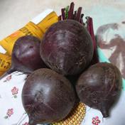 【化成肥料・農薬不使用】赤いビーツ 2kg 2kg 京都府 通販