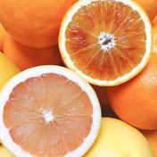 セットS*グレープフルーツとブラッドオレンジ2.5K 2.5K 果物(セット・詰め合わせ) 通販