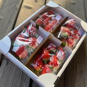 群馬オリジナルいちご2箱「やよいひめ」レギュラーパック詰め 280g×8パック 2箱 果物(いちご) 通販
