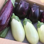 ブランド茄子【りんごあめ】3種食べ比べセット 丸茄子 3個 白茄子 2個 ゼブラ茄子 2個 野菜(茄子) 通販