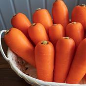 今が食べ頃! 北海道ニセコ町産『雪の下にんじん』‼ 約2kg 果物や野菜などのお取り寄せ宅配食材通販産地直送アウル