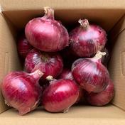 玉ねぎ大国淡路島からのレッドオニオン約3kg🧅 レッドオニオン3kg 野菜(玉ねぎ) 通販
