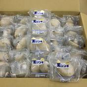 珍しいきのこ! 王リンギ50p入り 1パック当たり80g程度 野菜(きのこ) 通販