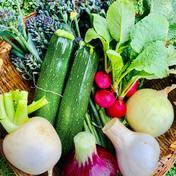 60サイズ 冷蔵発送 熊本県産 無農薬野菜セット お試し seikoファーム