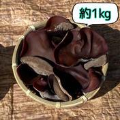 信州富士見高原産!ぷりっぷり生きくらげ 約1kg 約1kg 果物や野菜などのお取り寄せ宅配食材通販産地直送アウル