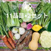 野菜11品×2セット★共同購入 シェア割 野菜11品×2セット 茨城県 通販
