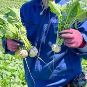 星イズ農園のスワンカブ 10kg 石川県 通販