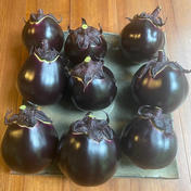 【ナスの女王!賀茂茄子 1kg(4個〜6個) 京野菜  】 1kg 野菜(茄子) 通販
