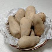 やっちゃん農園のジャガイモ メークイン15kg 15kg 島根県 通販