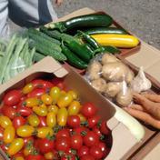 【驚くほど量が多い★お得セット★】北海道の野菜詰合せ 20年以上農薬未使用 約6kg 果物や野菜などのお取り寄せ宅配食材通販産地直送アウル