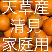 清見 家庭用 5kg  箱込5kg  果物(柑橘類) 通販