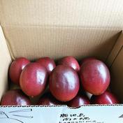 パッションフルーツ ご家庭用 5kg 果物(その他果物) 通販