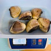 父の日 特大はまぐり 1キロ(6〜7個)〜 1キロ 魚介類(蛤) 通販