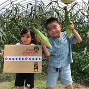 入江農園のスイートコーン 約4kgです。 熊本県 通販