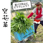 ワカイファーミーの空芯菜 1キロ(5袋分) 果物や野菜などのお取り寄せ宅配食材通販産地直送アウル