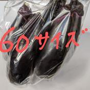 訳あり 大きい、キズあり60サイズ箱一杯 2キロ以内 埼玉県 通販