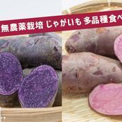 品種mix【じゃがいも】多品種食べ比べセット!(100サイズ) 約7kg 野菜(じゃがいも) 通販