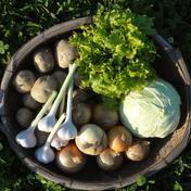 【2020最優秀賞/生産者直送/限定販売】うまみ強い玉ねぎ入りおまかせ収穫野菜セット5品 10kg以内 兵庫県 通販