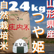 自然栽培 お米の旨味たっぷり氷温熟成 つや姫 玄米 24kg 24kg 山形県 通販
