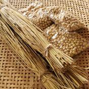 藁苞納豆を作ろう❗セット 大豆×3 藁苞×3   80サイズ その他(その他) 通販