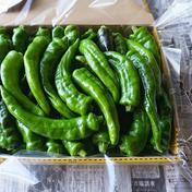 盛夏。房総の四季を味わう詰め合わせ。 コンパクトボックスいっぱい。 果物や野菜などのお取り寄せ宅配食材通販産地直送アウル