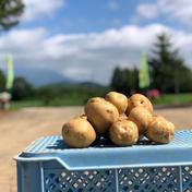 北海道産新じゃが  品種とうや 10kg 2Lサイズ 10kg 果物や野菜などのお取り寄せ宅配食材通販産地直送アウル