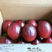 国産パッションフルーツ 約1kg 11〜14個 ご家庭用 1kg 果物(その他果物) 通販