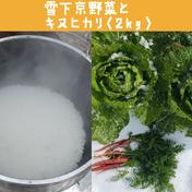雪下京野菜と献上米キヌヒカリのセット! 100サイズ キヌヒカリ(2㎏) 京都府 通販