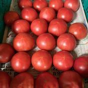 あられファーム 昔ながらの味 大玉 トマト 3kg