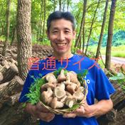 環の森(わのもり) 【原木生しいたけ】2kg 普通サイズ(約80〜100個) 〜森から育てる香る木の子シリーズ〜 2kg