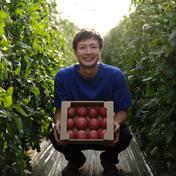 山本農園 情熱トマト(約2kg) 約2kg