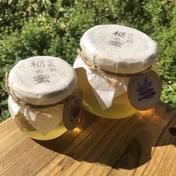 余呉の栃の蜜 370g 滋賀県 通販