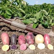 【訳あり】ジャガイモ6種4㎏ 4㎏ 野菜(じゃがいも) 通販
