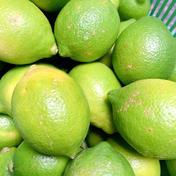 訳あり2K☆防腐剤ワックス不使用グリーンレモン 2キロ 16個から20個程度 果物(レモン) 通販