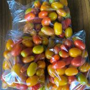 無農薬自然熟成ミニトマト2.5kg 2.5kg 果物や野菜などのお取り寄せ宅配食材通販産地直送アウル