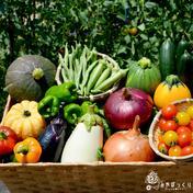 《ベジフェス》夏野菜達のお祭り第二幕in淡路島-80サイズ- 淡路島産たまねぎと夏野菜 果物や野菜などのお取り寄せ宅配食材通販産地直送アウル