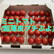 プレミアムミニトマト(プチぷよ)クール 600g 果物や野菜などのお取り寄せ宅配食材通販産地直送アウル