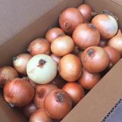 淡路島産玉ねぎ5kg (訳あり) 訳あり5kg  果物や野菜などのお取り寄せ宅配食材通販産地直送アウル