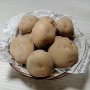 やっちゃん農園のジャガイモ キタアカリ20kg 20キロ 島根県 通販