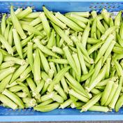 スーパーでは買えない野菜シリーズ/白オクラ ※クール冷蔵便 1kg 果物や野菜などのお取り寄せ宅配食材通販産地直送アウル