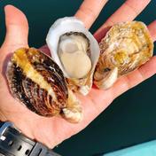 おうち時間価格❗️バージンオイスター 1kg 魚介類(牡蠣) 通販