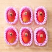 たなか果樹園 完熟マンゴー Lサイズ6パック 310~349g×6パック