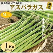 朝採りアスパラガス Mサイズ 1kg(約50本) 新潟県産  1kg 野菜(アスパラガス) 通販