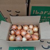 飯島ファームのペコロス 約1.2kg 果物や野菜などのお取り寄せ宅配食材通販産地直送アウル