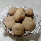 やっちゃん農園のジャガイモ キタアカリ10kg 10キロ 島根県 通販